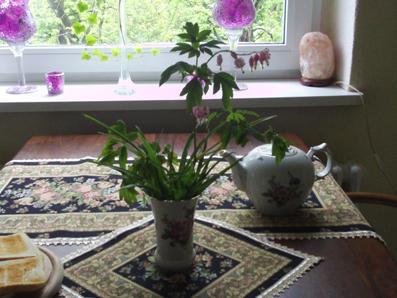blumen in der vase tr nendes herz dicentra spectabilis gartenelfe. Black Bedroom Furniture Sets. Home Design Ideas