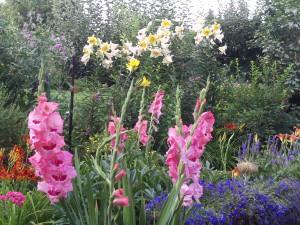 Gladiole, Baumlilie, Hortensie 054