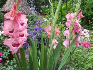 Gladiole, Baumlilie, Hortensie, Freilandhibiskus 079
