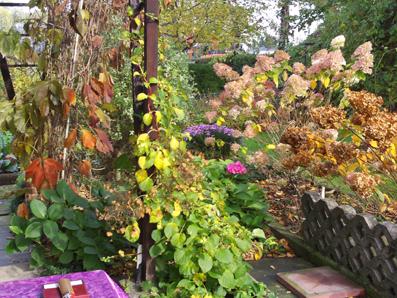 herbstblumen hortensien hydrangea gartenelfe. Black Bedroom Furniture Sets. Home Design Ideas