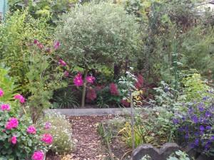 Fenster,Hortensie,Sedum,Aster.Geranie,Solanum 059