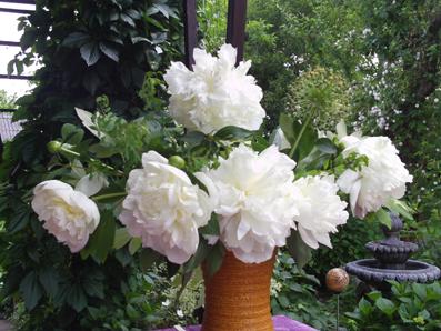 blumen in der vase wei e pfingstrose paeonia gartenelfe. Black Bedroom Furniture Sets. Home Design Ideas