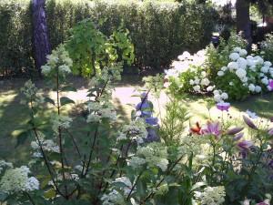 Baumlilie, Taglilie, Rose, Blauraute, Gladiole 075