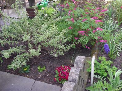Gartenarbeit im februar  Gartenarbeit im Februar - Gartenelfe