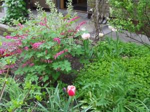 Garten Mai 4 030
