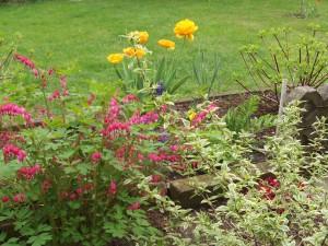 Garten Mai 4 048