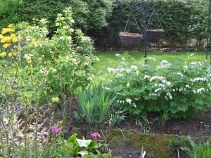 Garten Mai 5 006