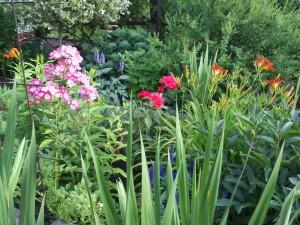 Baumlilie, Taglilie, Rose, Blaunessel 039