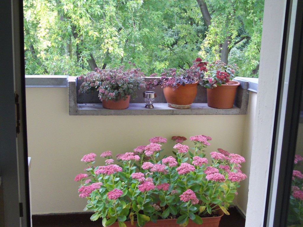 pflegeleichte pflanzen sedum fetthenne gartenelfe. Black Bedroom Furniture Sets. Home Design Ideas