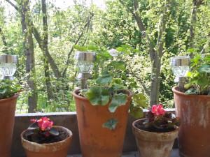 Balkon gestalten, Balkonpflanzen 016