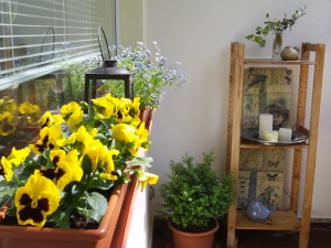 Balkon gestalten, Balkonpflanzen 104