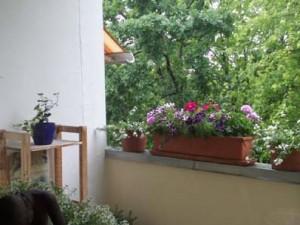 Deko, Balkonbepflanzung 004