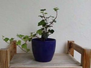 Deko, Balkonbepflanzung 005