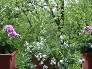 Deko, Balkonbepflanzung 012