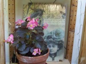 Decoupage, Balkonpflanzen 026